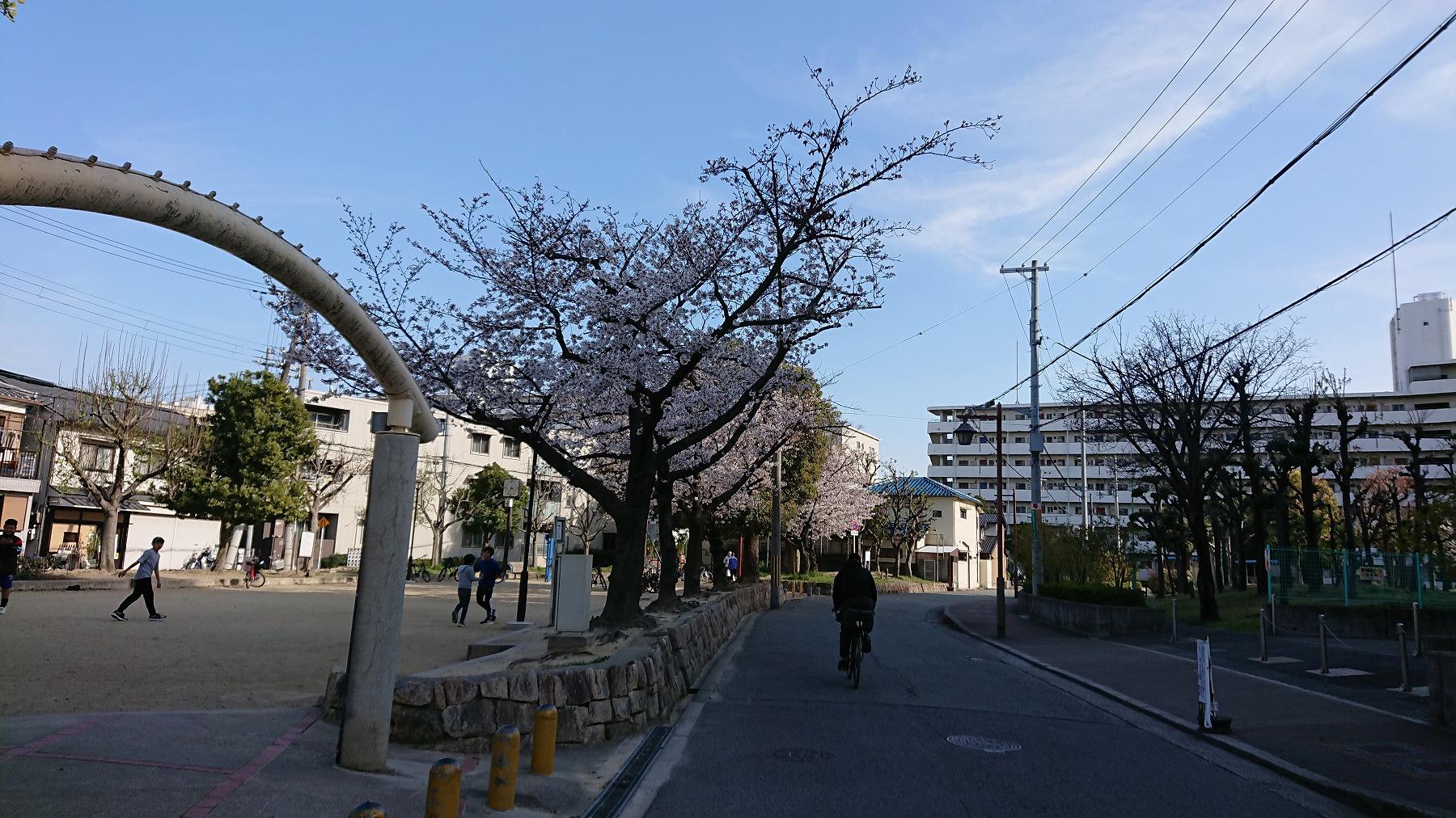 淡路駅の賃貸事務所・賃貸オフィス淡路駅前ラボ最寄りの東淡路南公園の桜