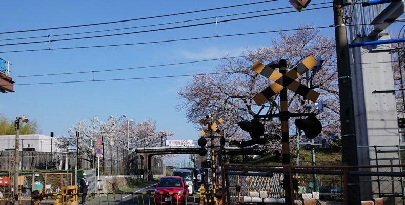 淡路駅のシェアオフィス・レンタルオフィス淡路駅前ラボ近くの柴島浄水場の桜