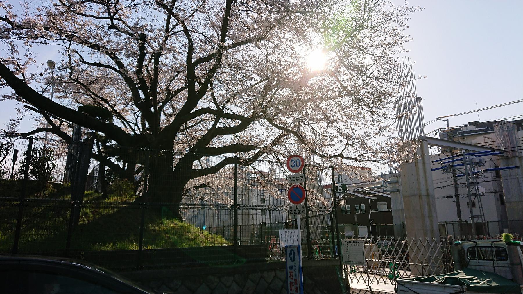 淡路駅の賃貸事務所・賃しオフィス淡路駅前ラボ近くの柴島浄水場の桜